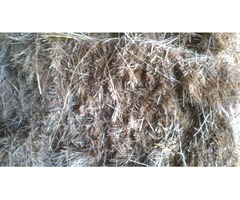 Top quality Horse meadow hay