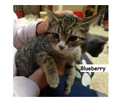 Blueberry - Animal Rescue Network New Zealand