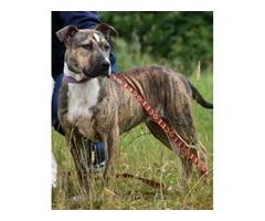 Ruby - SPCA Otago