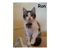 Ron - Animal Rescue Network New Zealand