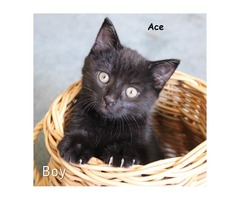 Ace - Animal Rescue Network New Zealand