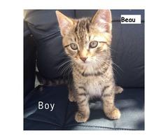 Beau - Animal Rescue Network New Zealand