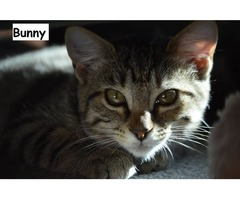 Bunny - Animal Rescue Network New Zealand