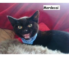 Mordecai - Animal Rescue Network New Zealand