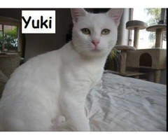 Yuki (Snow) - Animal Rescue Network New Zeland
