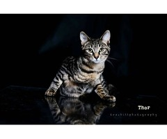 Thor - Animal Rescue Network New Zealand